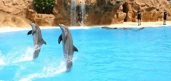 dolfijnen dolfinariumvrij