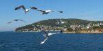 Ook Turkije: voorjaar op de Prinseneilanden