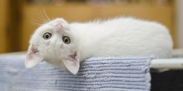 Katten moeten binnen blijven volgens Europees recht