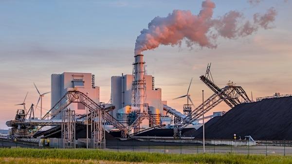 Milieuorganisaties: Stop bijstook biomassa in kolencentrales