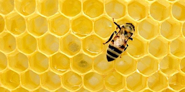 bij in honingraat bedreigd door sulfoxaflor