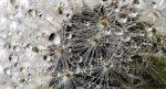 Nanodeeltjes veranderen samenstelling van bacteriën