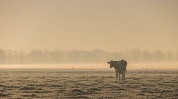 platteland van morgen