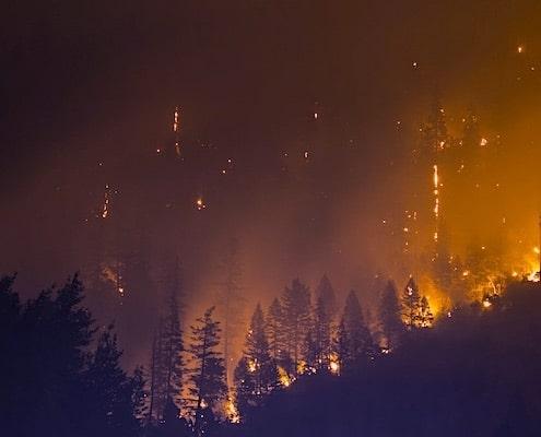 bosbrand klimaatverandering