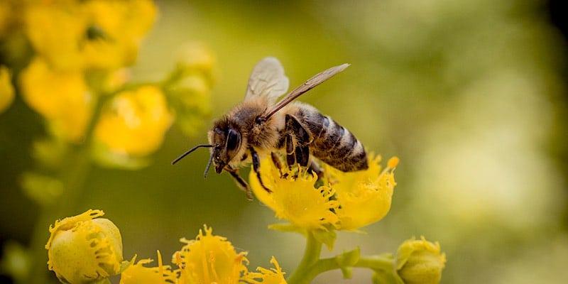 red bijen en boeren