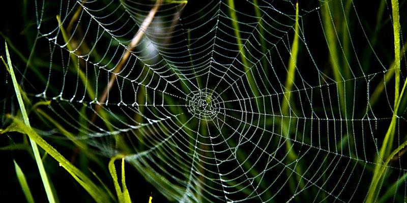 spinnendraad