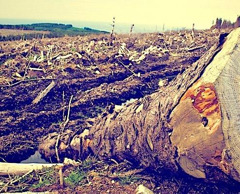 ontbossing voor biomassa