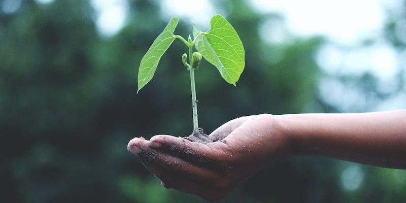 plantje in handpalm