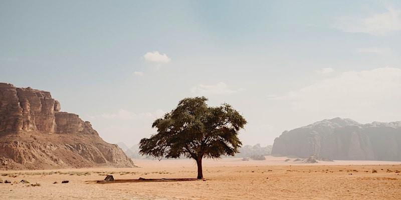 boompje in de woestijn